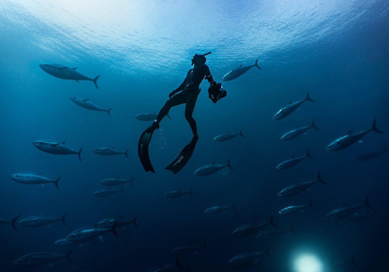 ninepin wetsuit ocean fish
